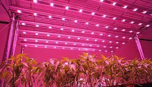 philips led grow light world led grow lights market 2017 philips osram fionia lighting