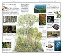 dk eyewitness travel guide brazil oliver marshall dilwyn