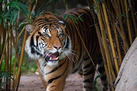 Houston Zoo Lights Prices by Image Gallery Houston Zoo Patas