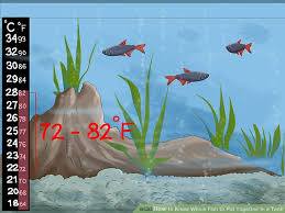 Live Plants In Community Aquariums by 3 Ways To Know Which Fish To Put Together In A Tank Wikihow
