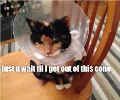 Cat Memes Generator - cat meme generator piday raspberrypi raspberry pi 皓 adafruit