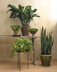 Indoor House Plants Low Light 20 Best Indoor Low Light Plants Images On Pinterest Low Light