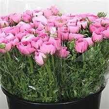 Ranunculus Flower Ranunculus Wholesale Flowers Uk Wedding Flowers Triangle Nursery