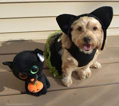 Pet Cat Halloween Costumes Black Cat Yourdesignerdog