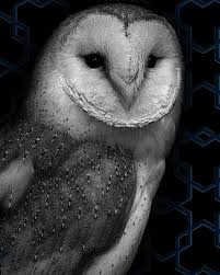 Barn Owl Photography Ghost Owl Photograph By Rose Fleming
