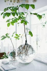 plante verte chambre à coucher plante verte dans une chambre a coucher 7 des limons dans un