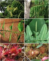 What Is Growth Movement Of A Plant Toward Light Called Motions Of Leaves And Stems From Growth To Potential Use Iopscience