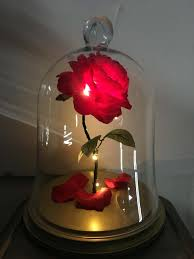 beauty and the beast rose enchanted rose rose in glass