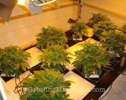 how much light do pot plants need the best marijuana grow lights