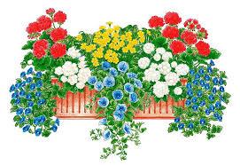 balkon grã npflanzen balkonpflanzen set lebensfreude kaufen otto