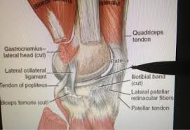 Lateral Patellar Ligament Atep 429 Knee Palpation At Luzerne County Community College