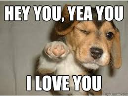 Memes About Love - hey you yea you i love you puppy love quickmeme