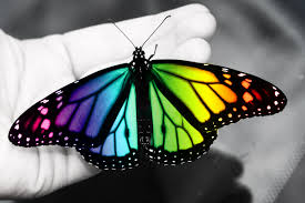 colorful butterfly by zayix on deviantart