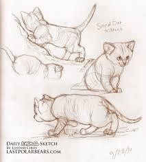 daily animal sketch u2013 sand cat kittens u2013 last of the polar bears