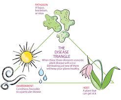 Types Of Plant Disease - 10 ways to keep your garden healthy fine gardening