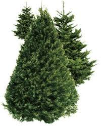 christmas tree sales black friday 2016 christmas tree lot svef