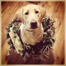 husky christmas cards christmas lights decoration