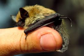 small bat bat check 1st the bats are back tips for keeping them out