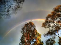 sky rainbow trees sunset sky wallpaper hd 16 9 high