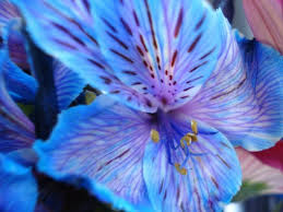 blue and purple flowers 35 best blue purple images on nature beautiful
