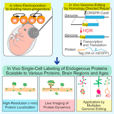 high throughput high resolution mapping of protein localization