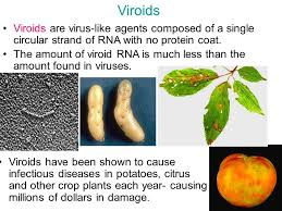 Viroid Diseases In Plants - discuss with the people around you the difference between these