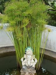 264 best water gardens images on pinterest water gardens