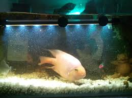 Types Of Aquarium Fish Which Fish Food Is Best For Aquarium Parrot Fishes Pets World