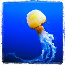 jellyfish at s e a aquarium resort world singapore sentosa