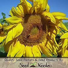 cheap low salt sunflower seeds find low salt sunflower seeds