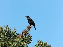 Tuis Tuis In My Garden A Great Wordpress Com Site