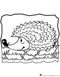 hedgehog coloring woo jr kids activities
