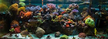 Marine Aquascaping Techniques How To Set Up A Saltwater Aquarium