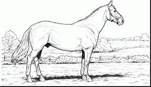 good wild horse coloring pages with horse coloring page