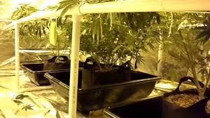 3000 watt 10x10 grow tent youtube