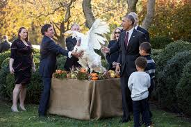 president obama s turkey pardon whitehouse gov