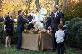 president obama s turkey pardon whitehouse gov