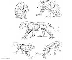 25 beautiful animal drawings inspiration draw