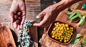 australian native food plants aboriginal chefs cooking with australian bush tucker