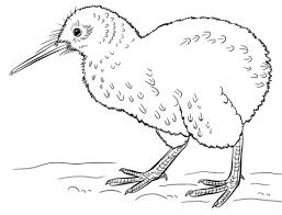 kiwi bird coloring page cute kiwi bird coloring pages cute kiwi