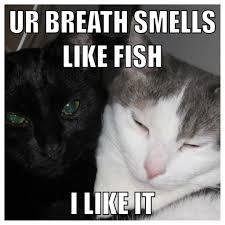 Cute Funny Cat Memes - funny cat meme home in a woods