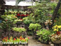 ornamental plants in quezon city traveler on foot