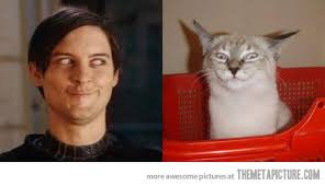 Meme Tobey Maguire - separated at birth the meta picture