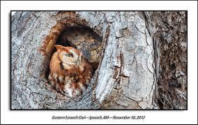 owls u0026 others of essex ma
