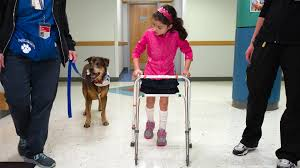 Dogs Helping Blind People Dogs With Special Needs Help Kids Heal In Physical Therapy Today Com