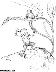tree frog coloring coloring pages tree frogs