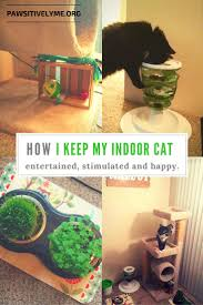 how i keep my indoor cat entertained stimulated and happy