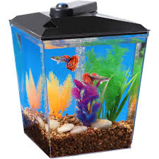 glofish 3 gallon aquarium kit with cover frame leds power