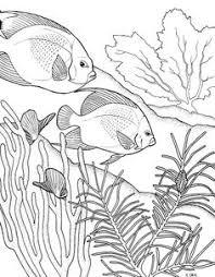 sea plants coloring pages seashells coloring page instant download por yetanothermomshop