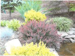 low maintenance perennial plant gardens u0026 installations jobe u0027s